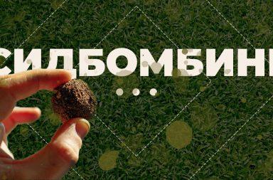Партизанское садоводство и сидбомбинг: эко-активизм, которого нам не хватает
