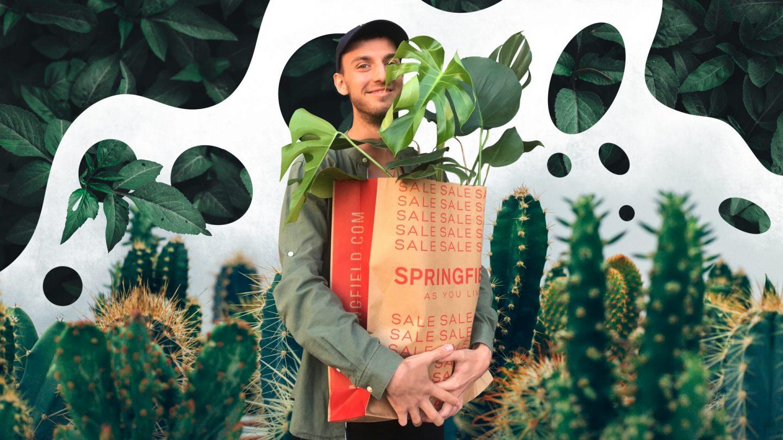 Вечно зеленые, вечно модные: секреты популярности комнатных растений (UA)