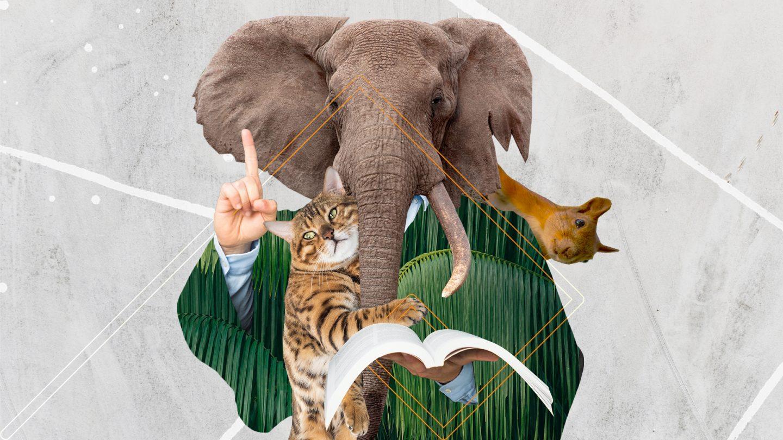 Невымышленные существа: всё о правах животных, их защите и содержании