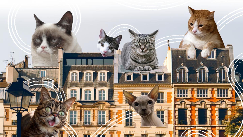 Коты в городе: четыре тысячелетия добрососедства