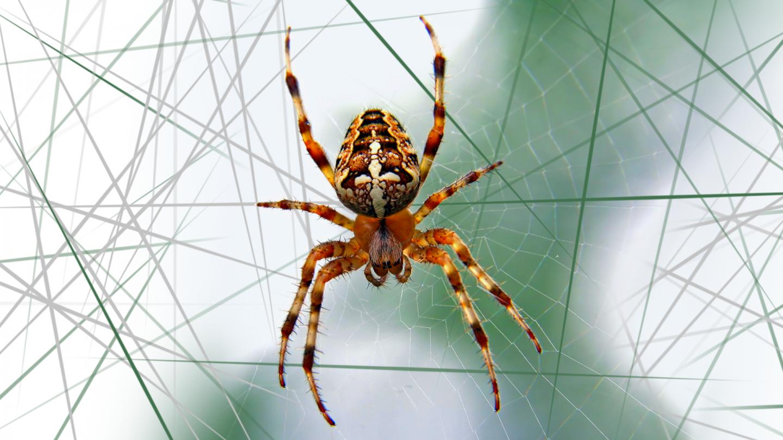 Хитросплетение сетей: пристальный взгляд на паутину