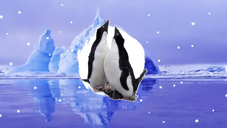 Анна Соина: добровольная изоляция среди антарктических красот (UA)